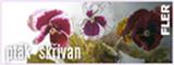 6JCH http://www.fler.cz/ptak-skrivan